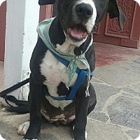 Adopt A Pet :: Pepper - San Ysidro, CA