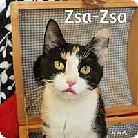 Adopt A Pet :: Zsa-Zsa - Pleasantville, NJ