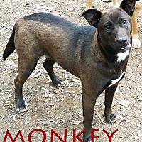 Adopt A Pet :: Monkey - Griffin, GA