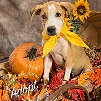 Adopt A Pet :: Buster - Gillsville, GA