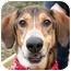 Photo 1 - Greyhound/German Shepherd Dog Mix Dog for adoption in Cincinnati, Ohio - Noodle