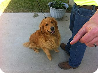 Golden Retriever Dog for adoption in Boonsboro, Maryland - Peyton