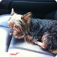 Adopt A Pet :: Tiny - Peru, IN