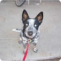 Adopt A Pet :: Wylie (adoption pending) - Phoenix, AZ