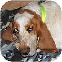 Adopt A Pet :: Jorgia Peach - Phoenix, AZ