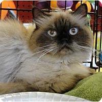 Adopt A Pet :: Lexi - Beverly Hills, CA