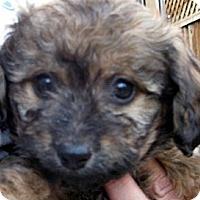 Adopt A Pet :: Baby Jill - Oakley, CA