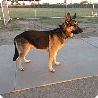 Adopt A Pet :: Dirkson Von Altenberg