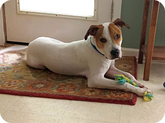 Terrier (Unknown Type, Medium)/Hound (Unknown Type) Mix Dog for adoption in Chattanooga, Tennessee - Sparky