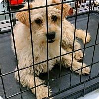 Adopt A Pet :: Boss - Palmdale, CA