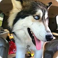 Adopt A Pet :: Mako - Clearwater, FL
