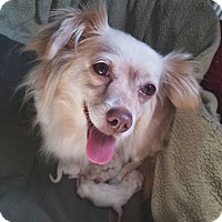 Adopt A Pet :: JOSEPHINE - Inland Empire, CA