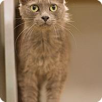 Adopt A Pet :: Amanda - Grayslake, IL