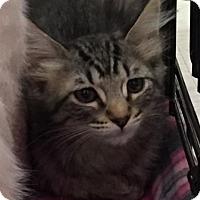 Adopt A Pet :: Tamara - Sacramento, CA