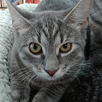 Adopt A Pet :: Masher Chen - Highland Park, NJ