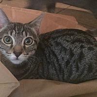 Adopt A Pet :: Aria - Scottsdale, AZ