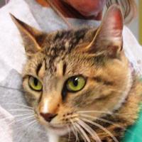 Adopt A Pet :: Purrfection - Memphis, TN