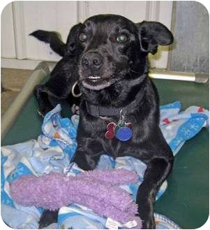 Terrier (Unknown Type, Small) Mix Dog for adoption in Marseilles, Illinois - Zimmer