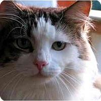 Adopt A Pet :: Ralph - Maxwelton, WV