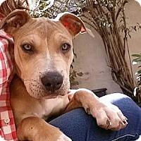 Adopt A Pet :: Ella - Clarksburg, MD