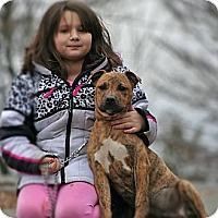 Adopt A Pet :: Tate - Spring City, PA