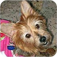 Adopt A Pet :: Carnie - Suwanee, GA