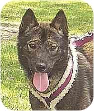 Jindo/Shiba Inu Mix Dog for adoption in Southern California, California - Iri