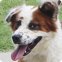 Adopt A Pet :: Hawkeye - Chapel Hill, NC