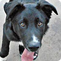 Adopt A Pet :: Baby Huck - Oakley, CA