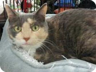 Calico Cat for adoption in Bear, Delaware - Carly