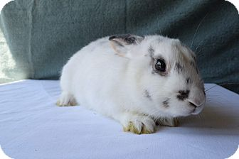 Other/Unknown Mix for adoption in Fountain Valley, California - Hops