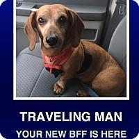 Adopt A Pet :: Dude - Morrisville, PA