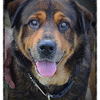 Adopt A Pet :: Leon - Chillicothe, OH