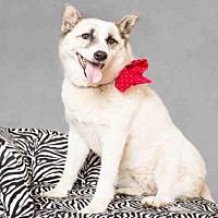 Adopt A Pet :: SHADOW - Wainscott, NY
