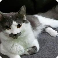 Adopt A Pet :: Stash - Witter, AR