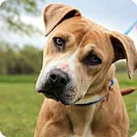Adopt A Pet :: Misty - Dillsburg, PA