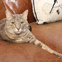 Adopt A Pet :: Serena - Cypress, TX