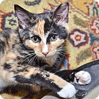 Adopt A Pet :: Flora - Davis, CA