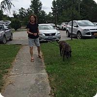Adopt A Pet :: Sonya - Elmsford, NY