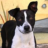 Adopt A Pet :: Verona - 27 pounds - Los Angeles, CA