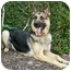 Photo 3 - German Shepherd Dog Dog for adoption in Los Angeles, California - Princess von Haritons