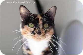 Calico Cat for adoption in Mission Viejo, California - Jade
