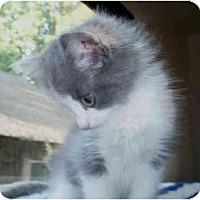 Adopt A Pet :: Angelica - Davis, CA