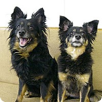 Adopt A Pet :: Molly and Shelby - Mocksville, NC