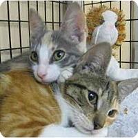 Adopt A Pet :: Caroline & Kennedy - Deerfield Beach, FL