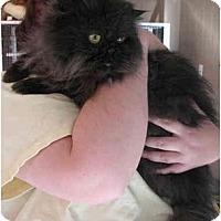 Adopt A Pet :: Tyrone - Davis, CA