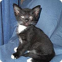Adopt A Pet :: Peach - Richland, MI