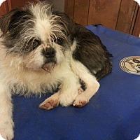 Adopt A Pet :: Anniebelle - Seneca, SC