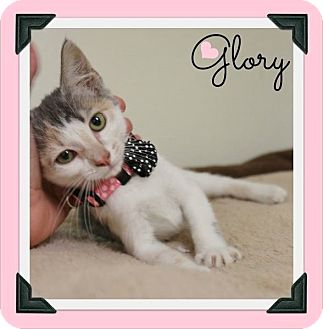 Calico Kitten for adoption in Cleburne, Texas - Glory