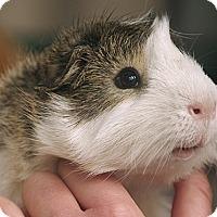 Adopt A Pet :: Drew - Santa Barbara, CA